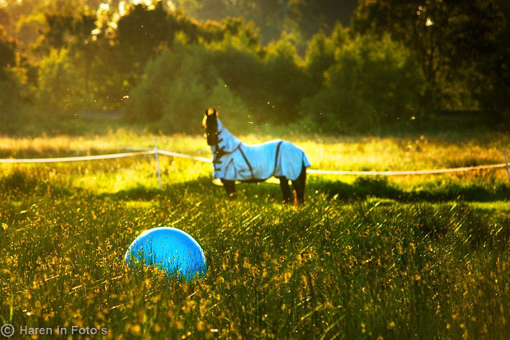 Paardenvoetbal_DSC3042b
