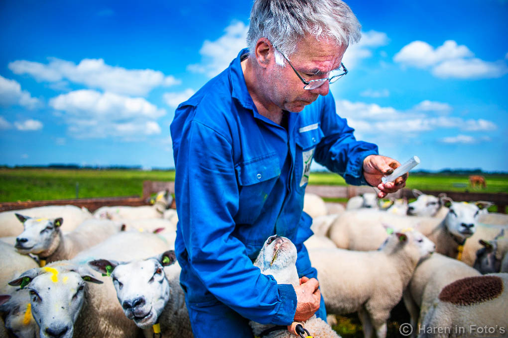 schapenboer-Venema_DSC7603
