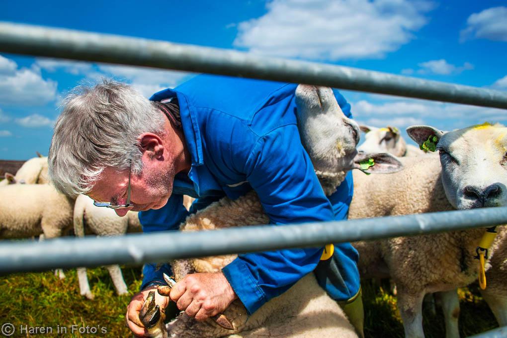 schapenboer-Venema_DSC7618