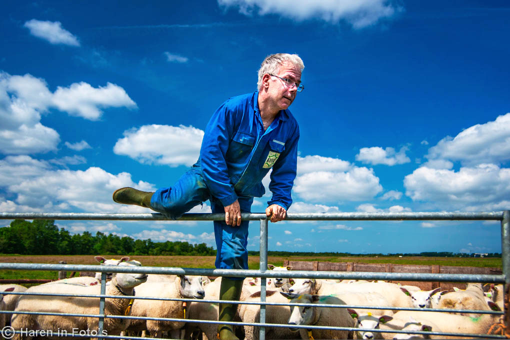 schapenboer-Venema_DSC7624